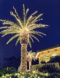 fantastic use of lights on a palm tree for