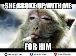Funny Monkey Meme - monkey memes