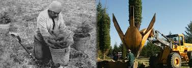 Real Topiary Trees For Sale - plants beautiful nursery minnesota live topiary trees and