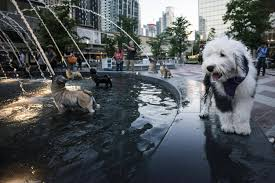 Home Design Story Dog Bone by Toronto U0027s Newly Renovated Berczy Park A Place For Everyone And