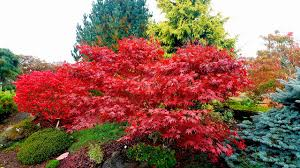 growing concern 13 trees shrubs plant magnificent fall