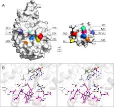 structural basis of interprotein electron transfer in bacterial