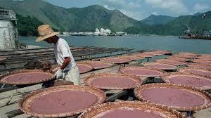 where cantonese chefs got their taste for shrimp paste post