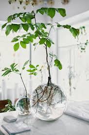 plante de chambre agréable deco romantique pour chambre 7 la plante verte