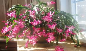 plant house plants beautiful house plants types 25 easy