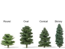 immitari scale trees