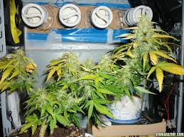 Superclosets by Pc Grow Box I Really Like This System It Is An Awesome Piece Of