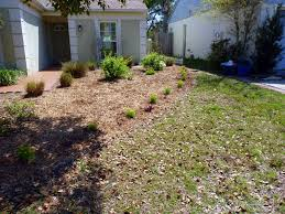 my florida backyard daisy bell