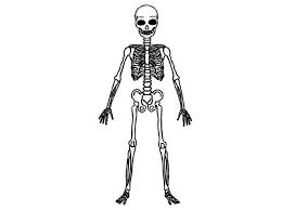 bone jewelry human skeleton drawing kids