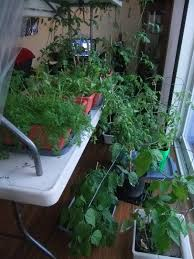 garden how to grow vegetables indoors using minimalist design