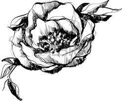 sketch of bud of flower of peony royalty free cliparts vectors