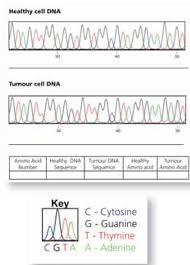 can you spot a cancer mutation www scienceinschool org