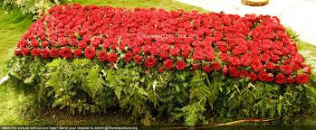 bangalore lalbagh flower show jan 2013 1