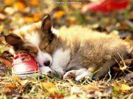 Cute Dogs Wallpapers by Dog And A Red Shoe Dog Wallpapers Backgrounds Dogs Wallpapers