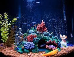 best lighting for corals before you buy reef tank lighting
