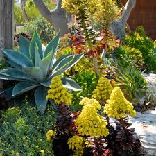 13 succulents that are native agave aloe cacti u0026 succulents inland valley garden planner