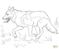running mexican grey wolf coloring page free printable coloring