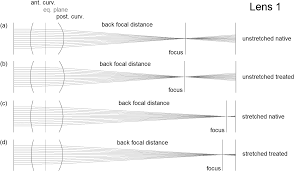measurement of ex vivo porcine lens shape during simulated