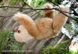 4 toed sloth hoffmann s two toed sloth facts history useful information and
