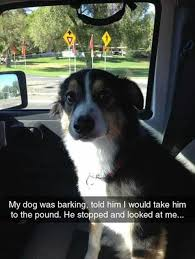 Dog Barking Meme - dog barking pound funny puppy memes pinterest dog animal and