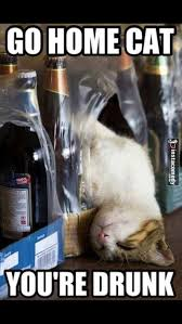 Drunk Cat Meme - go home cat you re drunk hilarious pinterest cat animal