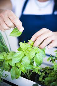 maintain an indoor herb garden and create your own green paradise