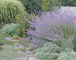 gardenlady com carefree perennials
