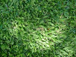 shade tolerant grass learn about the best grass seed for shade