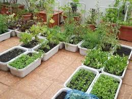 Terrace Gardening | terrace gardening service terrace gardening service in udumalpet