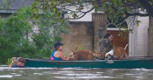 harvey will drive 30 000 to shelters fema says