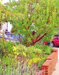 115 best gardening california native low water landscaping