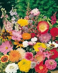 cottage garden mix cottage garden mix seeds flower seeds