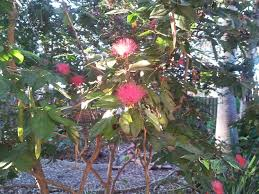 florida flowering trees identification best flowers and 2017