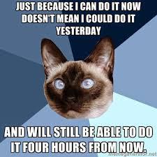Heidi Meme - monday 23 february 2015 meme images chronic illness cat