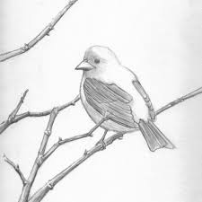 tag for simple drawings of birds gallery images and information