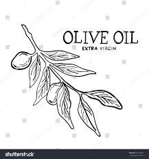 hand drawn sketch olive tree brunch stock vector 381078997