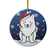 american eskimo dog calgary 20 best american eskimo images on pinterest american eskimo dog