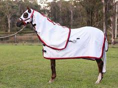 gg australia magnetic therapy horse rug horse gear horse and