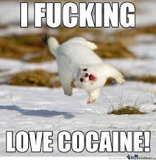 Bear Cocaine Meme - i fucking love cocaine memes best collection of funny i fucking