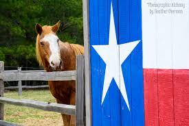 El Paso Texas Flag This Ain U0027t My First Rodeo Back To Texas Again Vue Via Vida