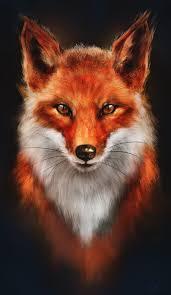 sleeping red fox wallpapers best 25 fox drawing ideas on pinterest fox fox tattoos and