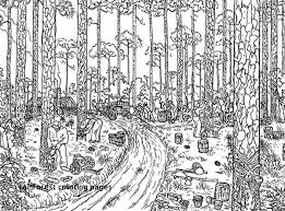 coloring pages for adults tree rainforest coloring page trees logging coloring page for coloring
