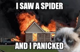 I Saw A Spider Meme - i saw a spider