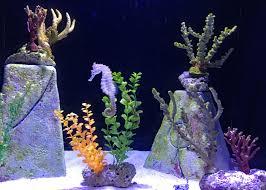 Atlantis Comfort Suites Review Comfort Suites Paradise Island Hotel Bahamas Travelingmom