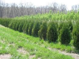 alfeldt s tree farm oakdale il 62268