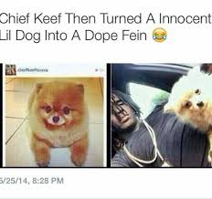 Chief Keef Memes - chief keef s dog tho blackpeopletwitter
