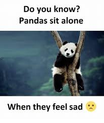 Feeling Sad Meme - do you know pandas sit alone when they feel sad being alone