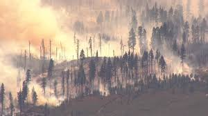 Eastern Washington Wildfire Update by Firefighters Say Cat Started Brushfire In Eastern Washington Q13