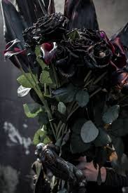 black roses for sale think ink black roses for valentines day neatorama