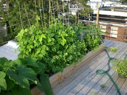 phigblog u2013 edible landscaping urban farming food growing in